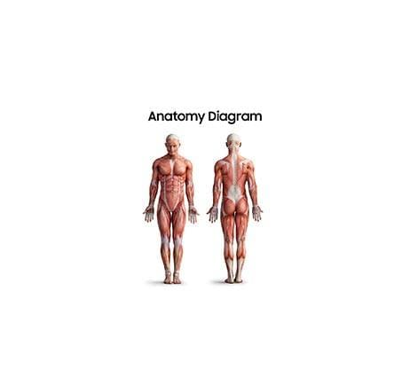 [Flip] Anatomy diagram